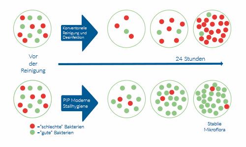 Bakterien bei Einsatz von PIP moderne Stallhygiene