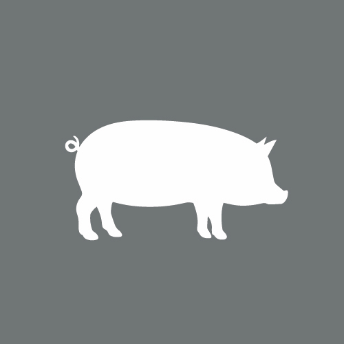 PIP in der Schweinehaltung